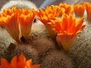 ~Autres plantes xérophytes~ 230-7