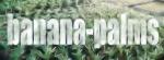 ~Bananiers~ 32-77