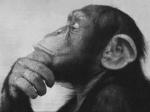 Sapiens sapiens