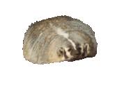 BadgerMan11