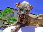perro_culero