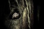 mila-poney