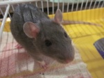 ratouparty