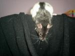 Rat0une