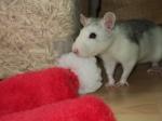 Lovee-Rat's