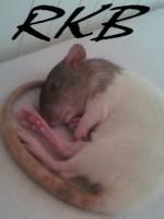 Rats-KroBates