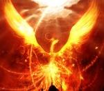 Phoenix240