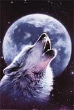Wild-Kat-Wolf