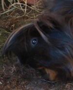 datMeerschwein