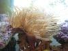 aquarium Img_0111