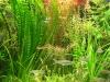 aquarium Noel_011