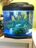 aquarium Photo011