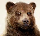Bigteddy bear