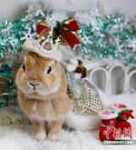 le lapin de Noël