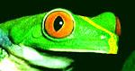 FroggySeven