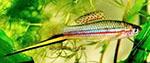 Fishy64