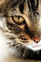 Katzen des Waldes 15-14