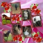 créer un forum : chiens-chats-chevaux.forumactif 1-77