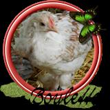 Boulette08