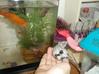 Precious Danny by the fish. :)