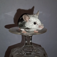 Pet Mouse Fanciers Forum 1151-20