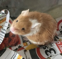 Mouse Behavior 1232-98