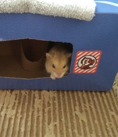 Mice Wanted/Available 1323-39
