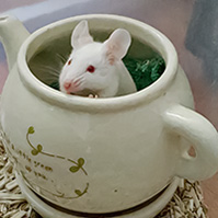 Mice Wanted/Available 1713-53