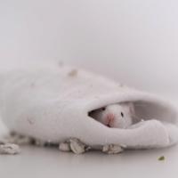 Pet Mouse Fanciers Forum 1816-83