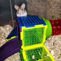Mice Wanted/Available 216-78