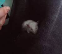 Bennies_mice