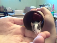 Mice Wanted/Available 800-82