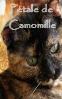 Pétale de Camomille