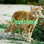 Opalstern
