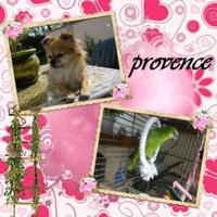 provence26