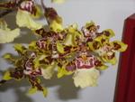 orchidée8313
