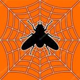 В поиске паука