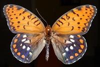 mothman27
