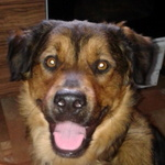BaDoGood плохая-хорошая собака 9-58
