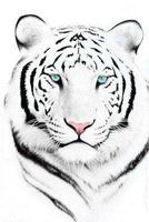 White - tighr