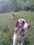 barney le beagle