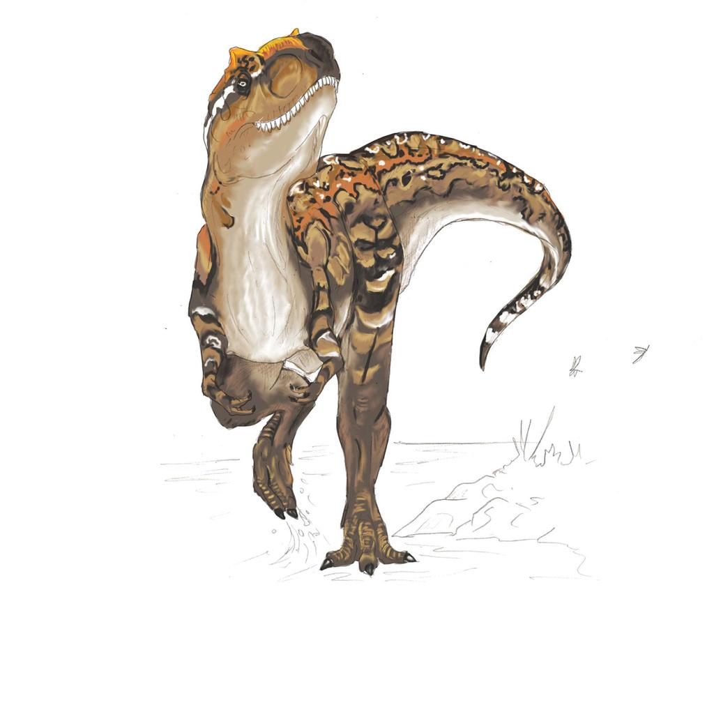 Mottled Rex