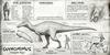 Official Suchomimus Dossier