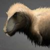 Head of the Feathered Tyrannosaurus Rex.