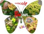 Nicole de NEVERS