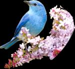 Birdyfly