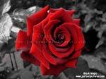 الزهراء 36