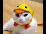 QuackPrr