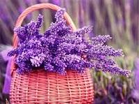 violetaelavanda