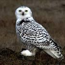 owl.hiphop